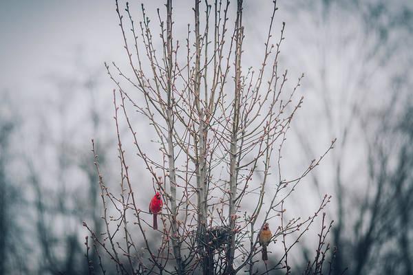 Wall Art - Photograph - Love Birds by Amber Flowers