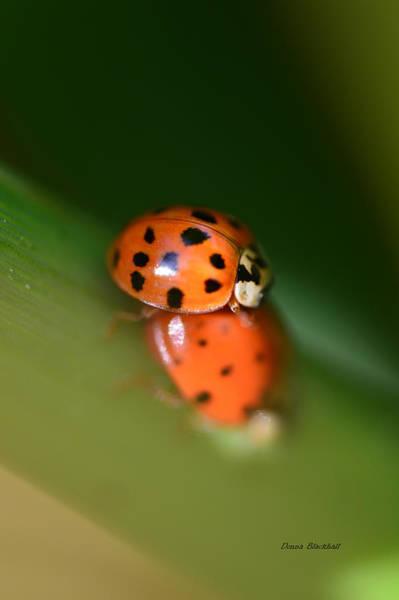 Ladybird Wall Art - Photograph - Love Bug by Donna Blackhall