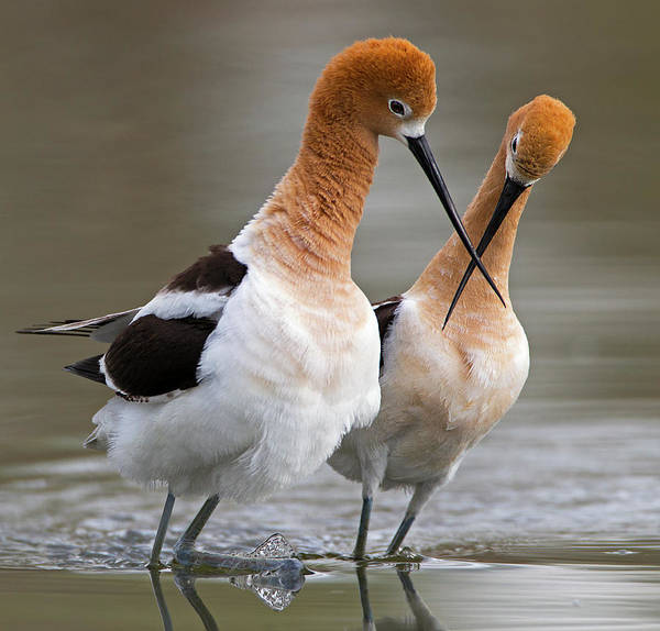 Beaks Photograph - Love Crossing ... by