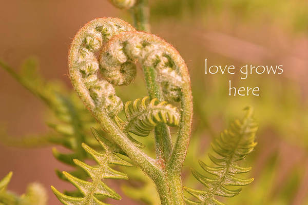 Photograph - Love Grows Here by Peggy Collins