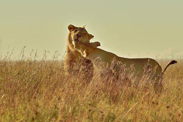 Love Photograph - Love In Serengiti by Safique Hazarika Photography