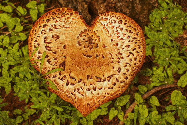 Digital Image Digital Art - Love Of Nature by Jack Zulli