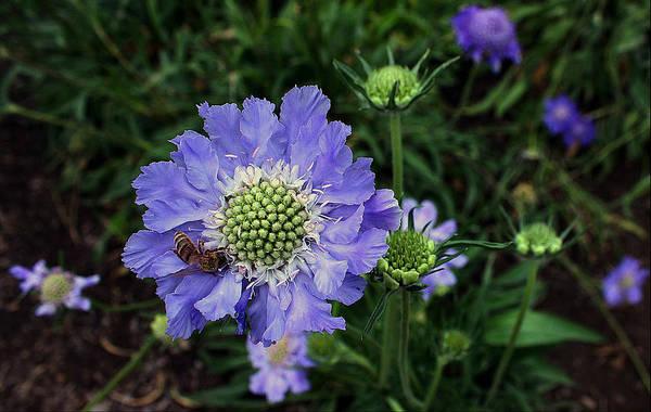 Manito Park Spokane Photograph - Lovely In Purple by Ellen Tully