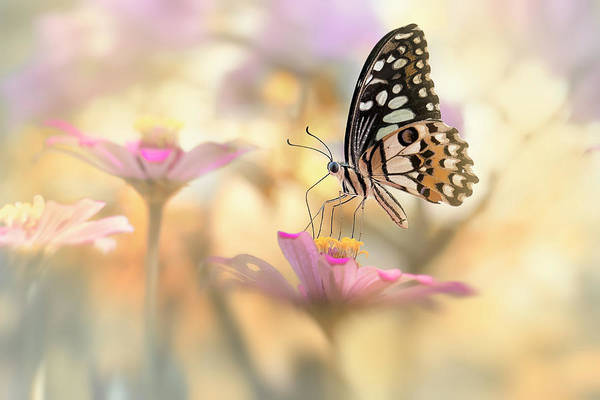 Wall Art - Photograph - Lovely Morning Dance by Fauzan Maududdin