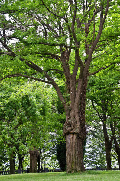 Bilbao Photograph - Lovely Park Featuring Giant Trees by Jan and Stoney Edwards