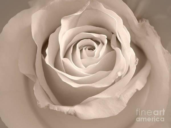 Photograph - Lovely Rose by Lutz Baar