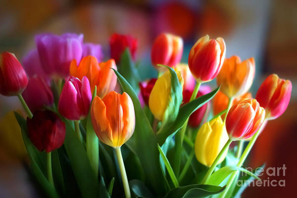 Wall Art - Photograph - Lovely Tulips by Lutz Baar