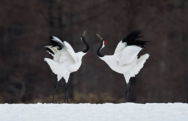 Pair Photograph - Lovers by C.s. Tjandra