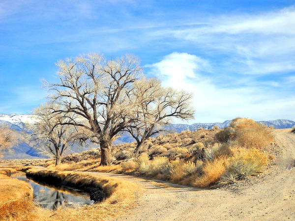 Bishop Hill Photograph - Loving Dirt Roads by Marilyn Diaz
