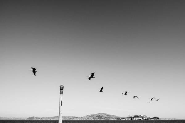 Low Angle View Of Birds Flying Against Clear Sky Art Print by Christian Soldatke / EyeEm