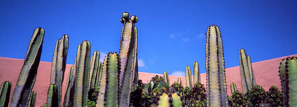 Wall Art - Photograph - Low Angle View Of Cactus by Panoramic Images
