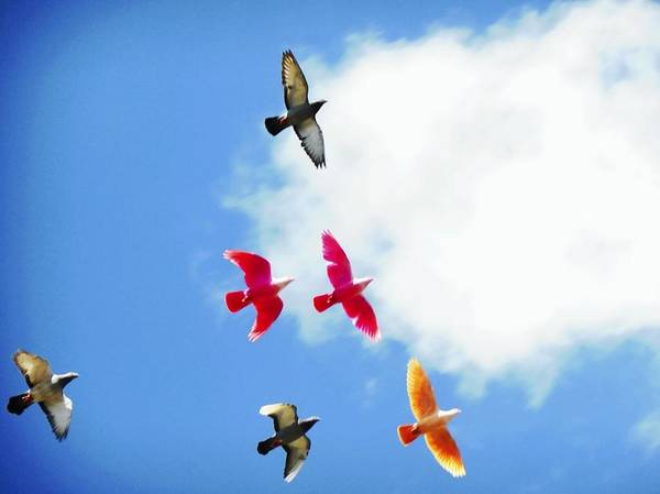 Photograph - Low Angle View Of Multicolored Birds by Sami Falk Taha / Eyeem