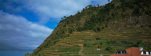 Azores Photograph - Low Angle View Of Terraced Fields by Panoramic Images