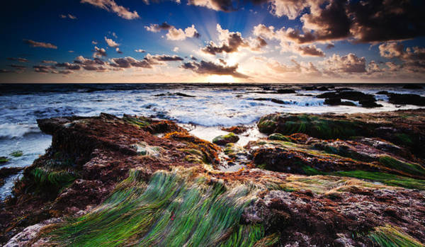 Wall Art - Photograph - Low Tide by Micah Dimitriadis