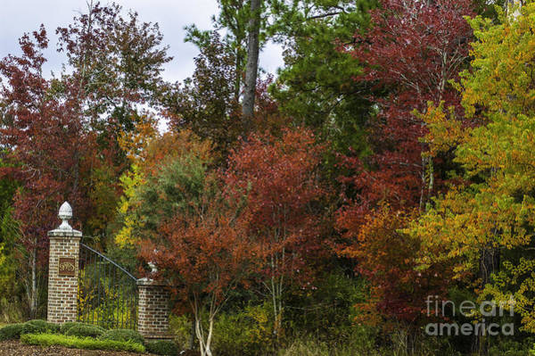 Photograph - Lowcountry Fall Color by Dale Powell