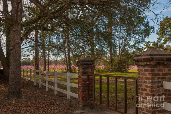 Photograph - Lowcountry Gates To Boone Hall Plantation by Dale Powell