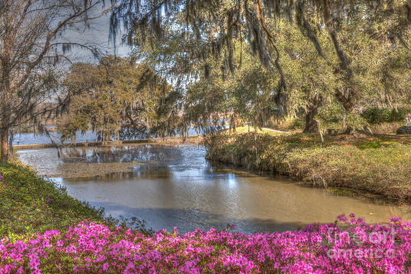 Photograph - Lowcountry Gem by Dale Powell