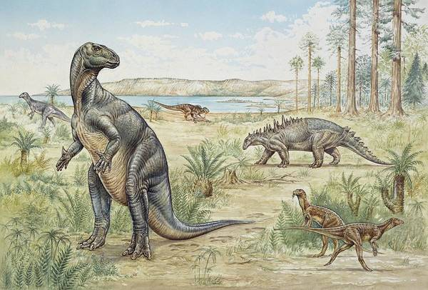 Wall Art - Photograph - Lower Cretaceous Dinosaurs by Natural History Museum, London/science Photo Library
