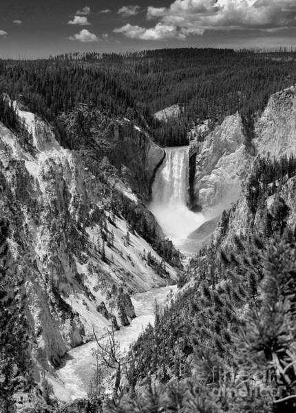 Photograph - Lower Falls Of Yellowstone B W by Jemmy Archer
