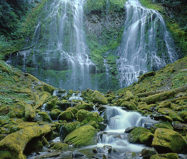 Photograph - 1m5427-lower Proxy Falls by Ed  Cooper Photography