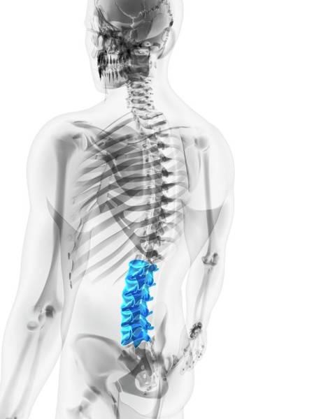 Lumbar Vertebra Photograph - Lower Spine by Sciepro/science Photo Library