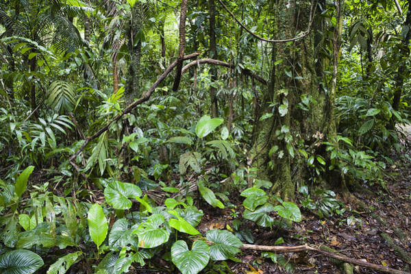 Carrillo Photograph - Lowland Rainforest Costa Rica by Konrad Wothe