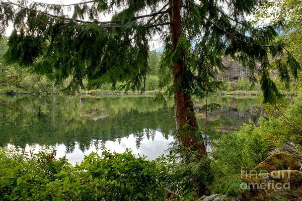 Photograph - Lush Green At Starvation Lake by Adam Jewell