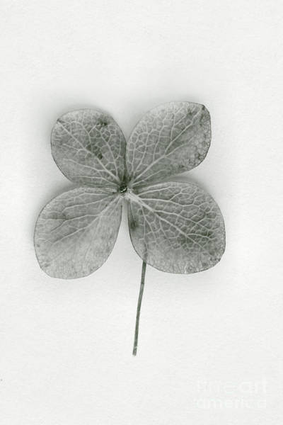 Four Leaf Clover Photograph - Luck by Margie Hurwich