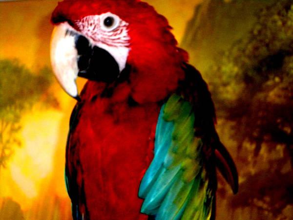 Photograph - Lucky Look Bird by Colette V Hera  Guggenheim