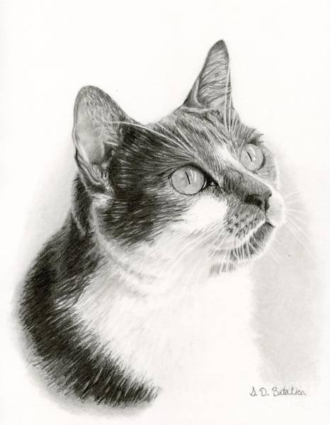 Pet Portrait Drawing - Lucy by Sarah Batalka