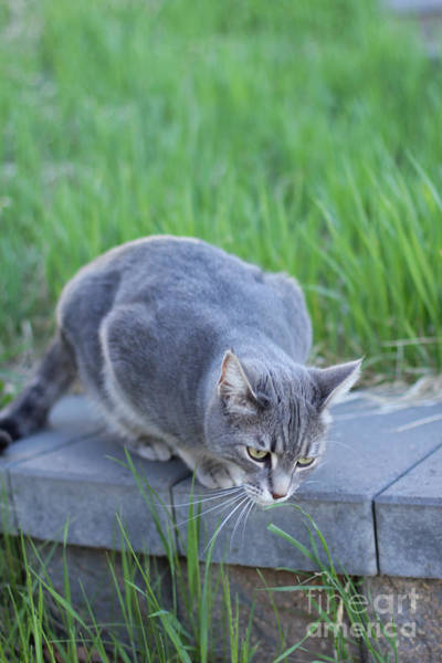 Photograph - Lulu Considers Grass by Donna L Munro