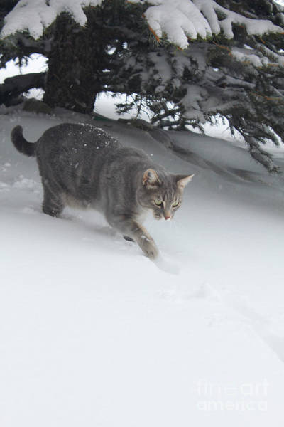Photograph - Lulu Plays In Snow by Donna L Munro