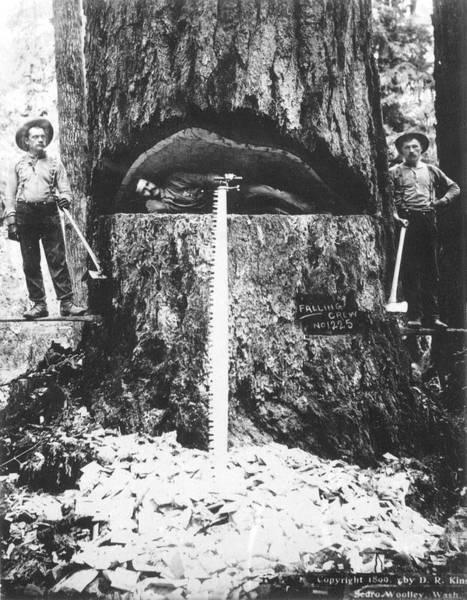 Photograph - Lumberjacks, 1899 by Granger