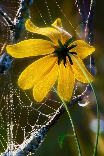 Photograph - Luminous Glow by Dale Kincaid