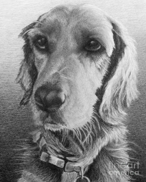 Golden Retriever Drawing - Luna by Chad Keith