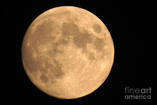 Photograph - Lunar Mood by Mary Mikawoz
