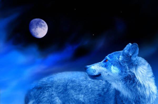 Alpha Wolf Wall Art - Photograph - Lunar Wolf 2 by Mal Bray