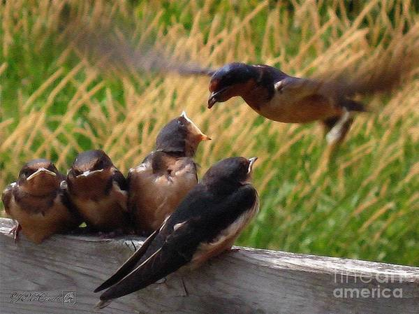 Flight Deck Painting - Lunch Is Served To The Fourth Baby Barn Swallow by J McCombie