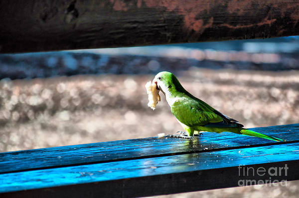 Photograph - Lunch Time by Charlie Roman
