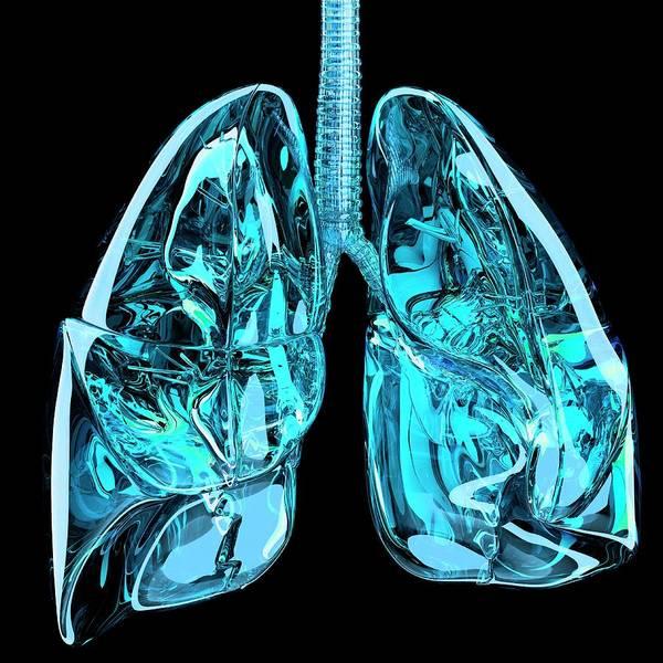 Bronchus Photograph - Lungs by Laguna Design