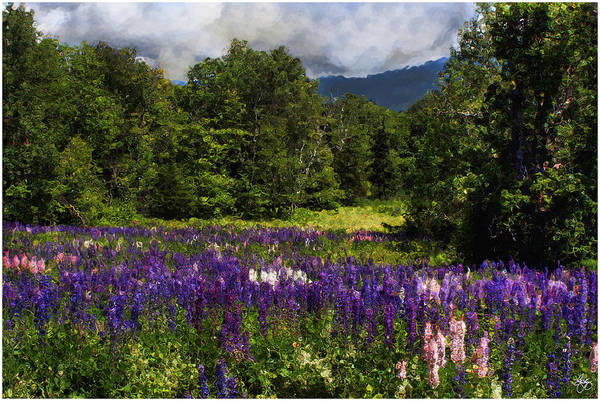 Photograph - Lupine Impressions by Wayne King