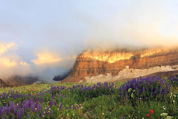 Lupine Wildflowers On Mount Timpanogos Art Print