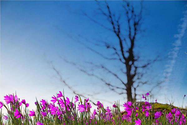 Rowena Photograph - Grass Widows In Bloom by Kunal Mehra