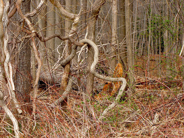 Photograph - Lure Of The Thicket by Lynda Lehmann