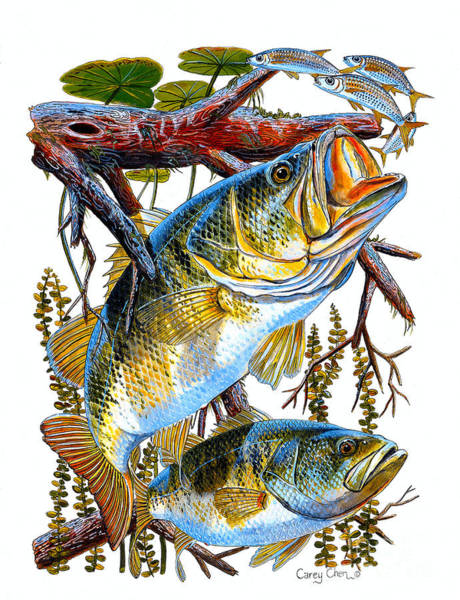 Freshwater Wall Art - Painting - Lurking Bass by Carey Chen