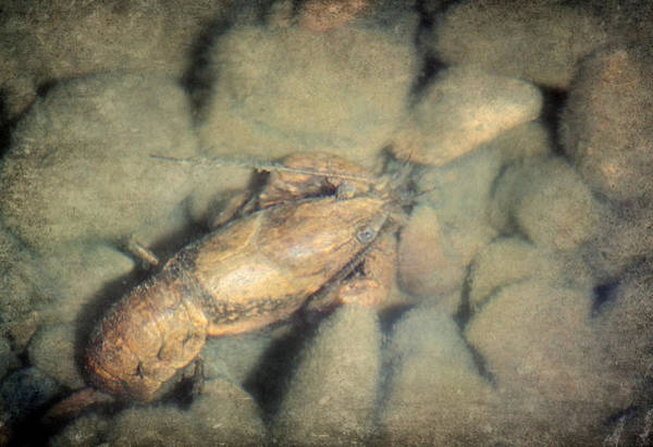 Craw Wall Art - Photograph - Lurking by Melanie Lankford Photography