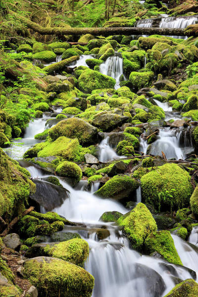 Ecosystem Photograph - Lush Area With Small Creek by Tom Norring