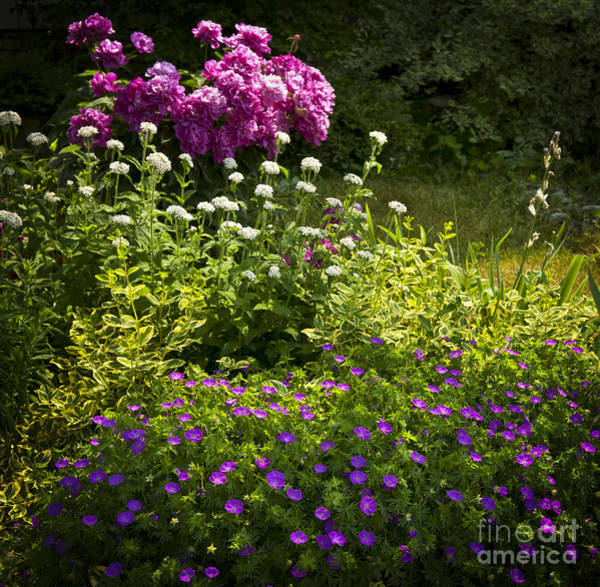 Flowering Plants Photograph - Lush Blooming Garden  by Elena Elisseeva
