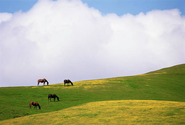 Grazing Photograph - Lush Grazing For Horses In The Meadows by Mint Images - David Schultz