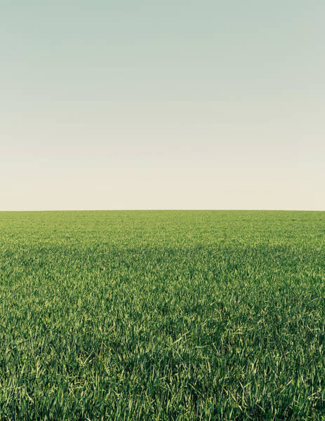 Cultivate Photograph - Lush Green Wheat Crop Growing In A by Mint Images - Paul Edmondson